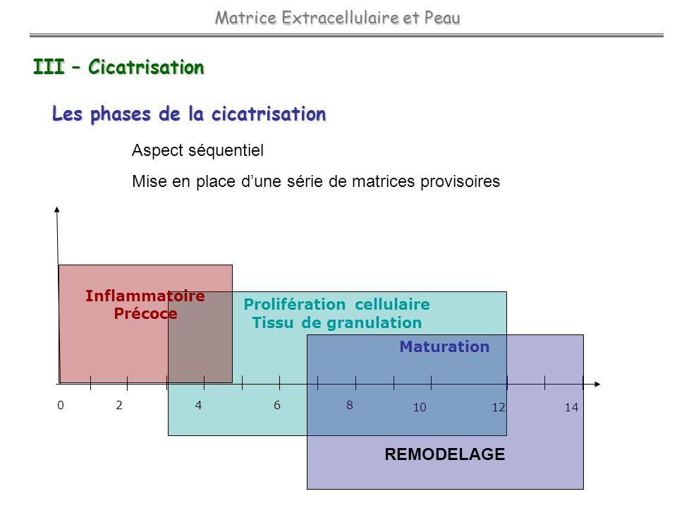 Prolifération cellulaire