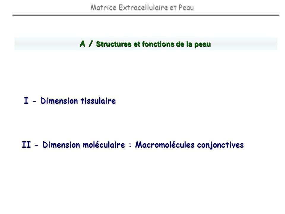 A / Structures et fonctions de la peau