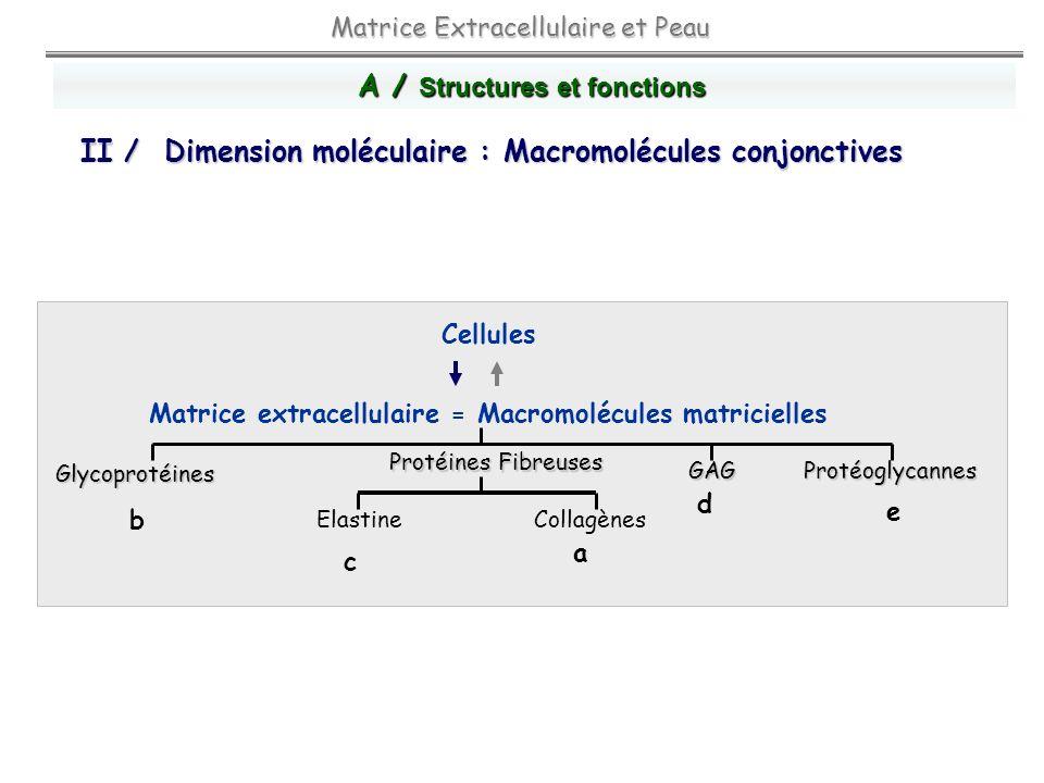 Matrice extracellulaire = Macromolécules matricielles