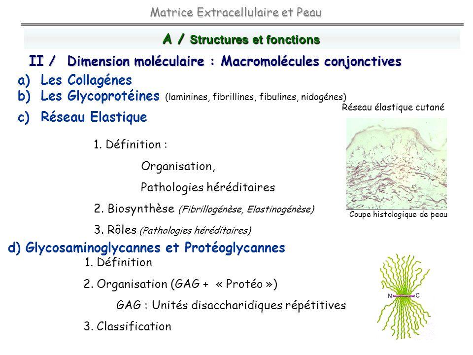 A / Structures et fonctions
