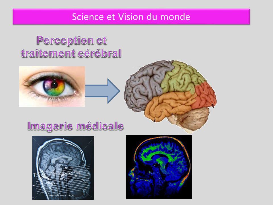 Perception et traitement cérébral
