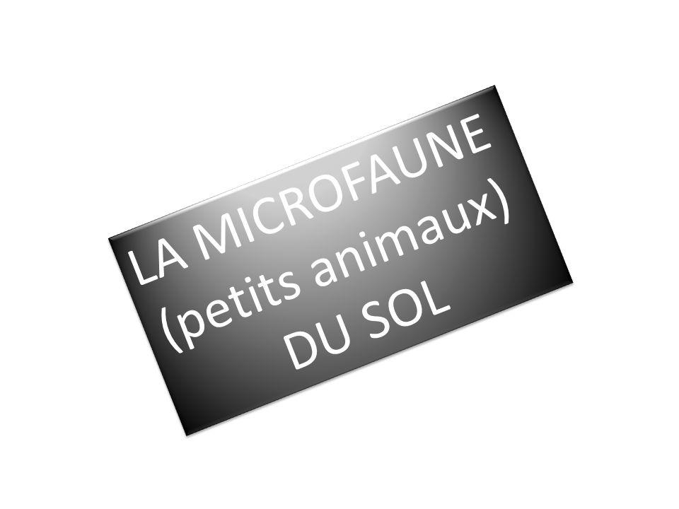 LA MICROFAUNE (petits animaux) DU SOL