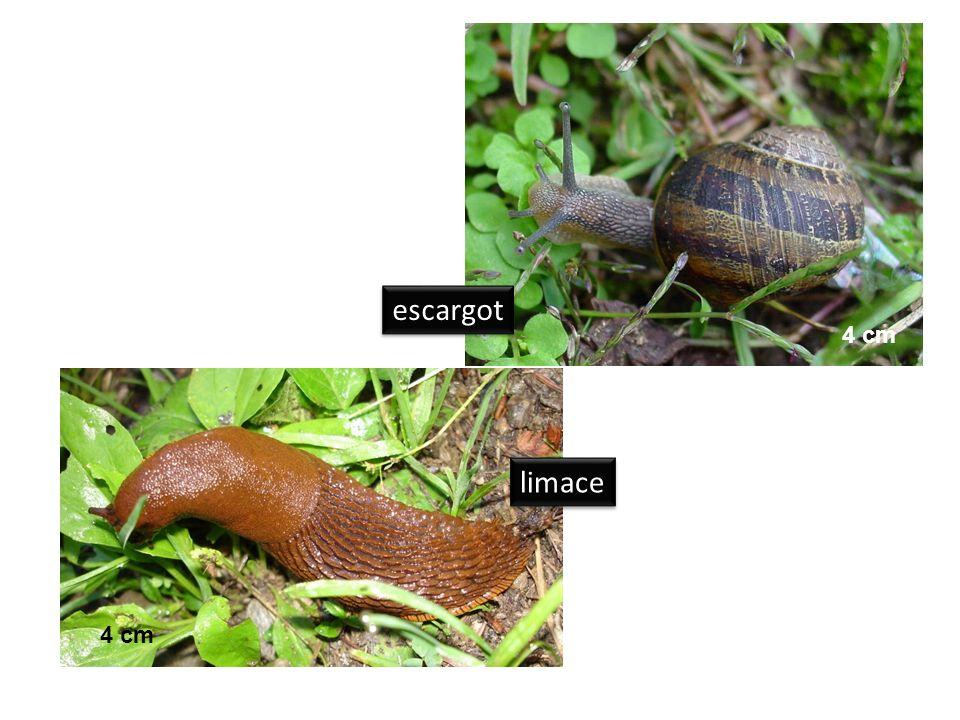 escargot 4 cm limace 4 cm