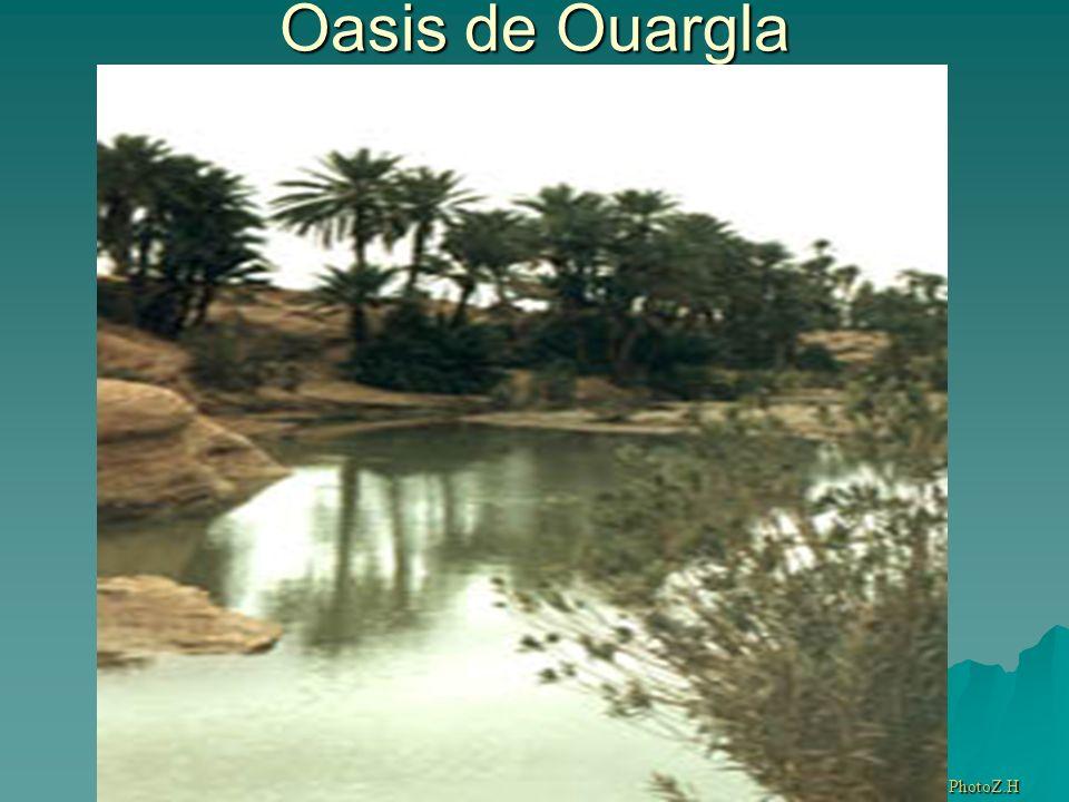 Oasis de Ouargla PhotoZ.H