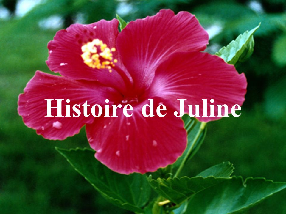 Histoire de Juline