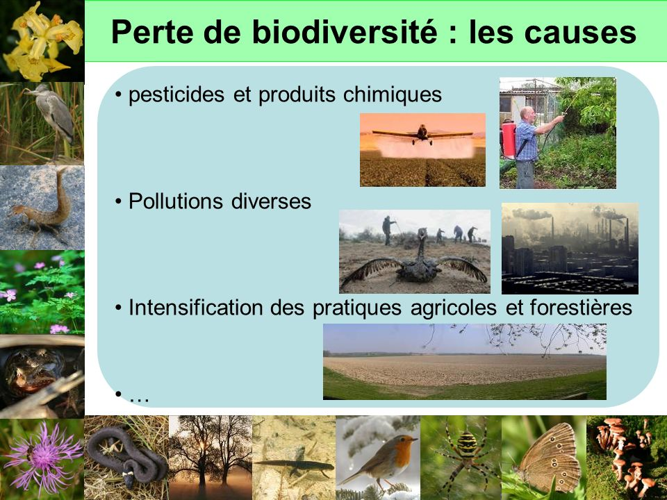 Perte de biodiversité : les causes
