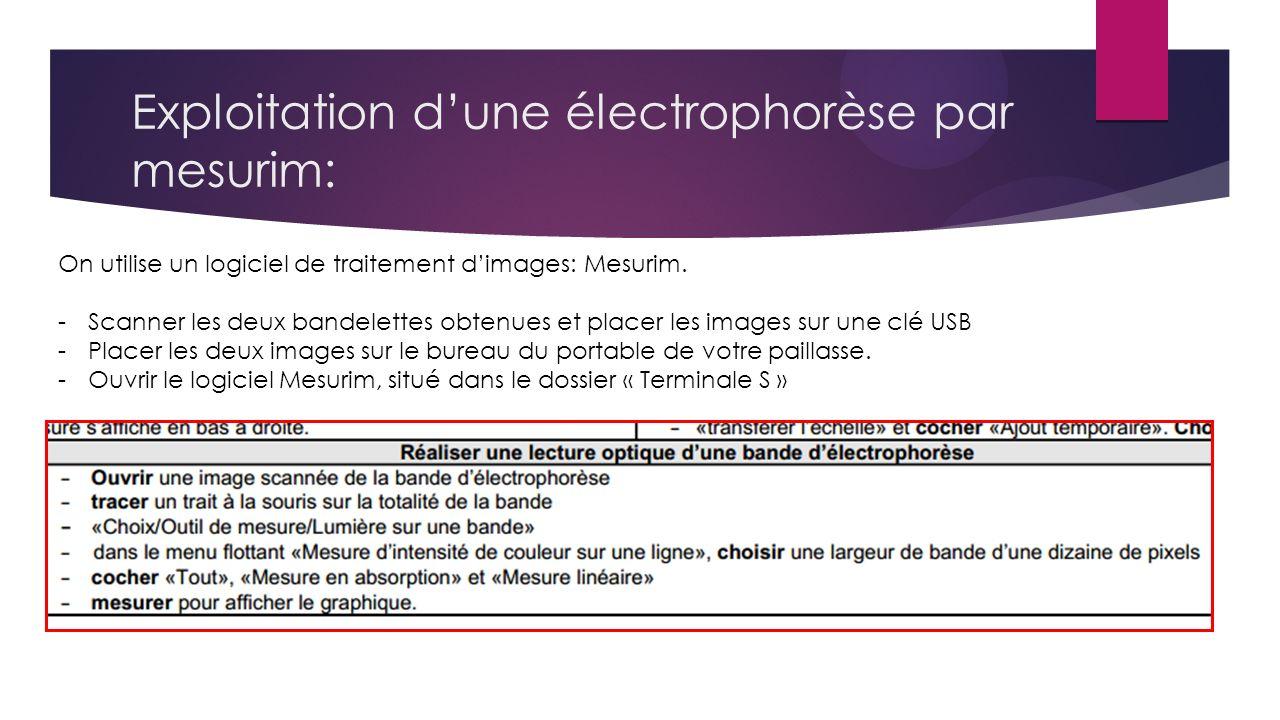 Exploitation d'une électrophorèse par mesurim: