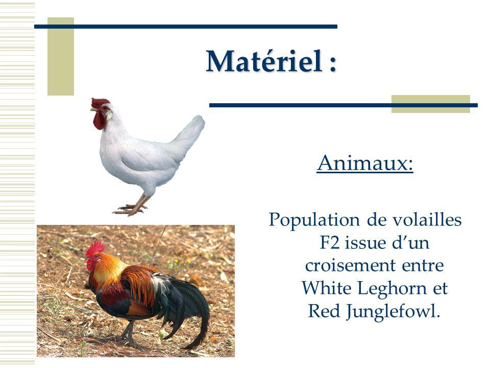 Matériel : Animaux: Population de volailles F2 issue d'un croisement entre White Leghorn et Red Junglefowl.
