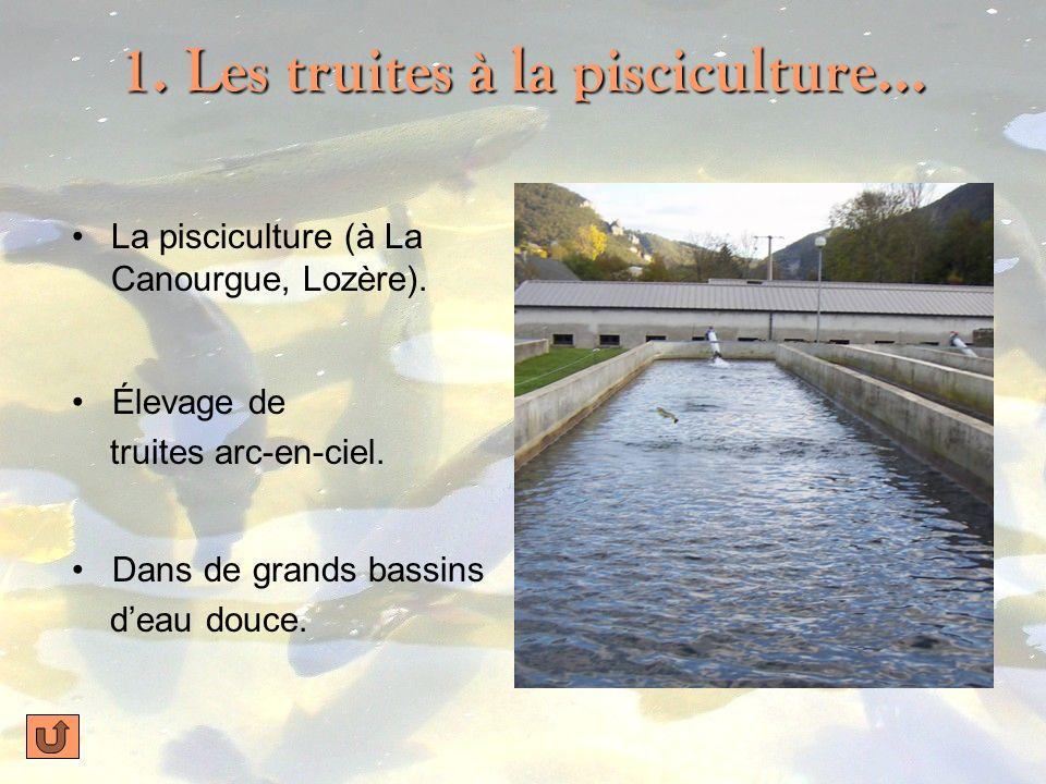 1. Les truites à la pisciculture…