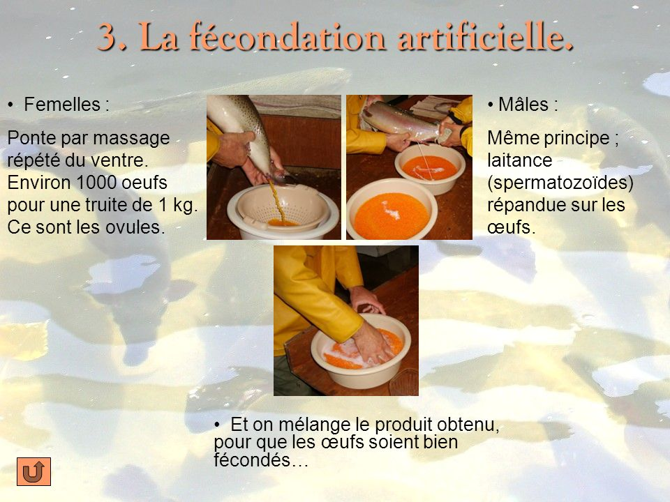 3. La fécondation artificielle.