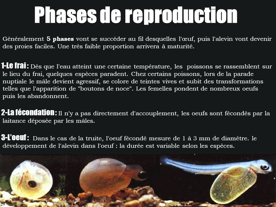 Phases de reproduction