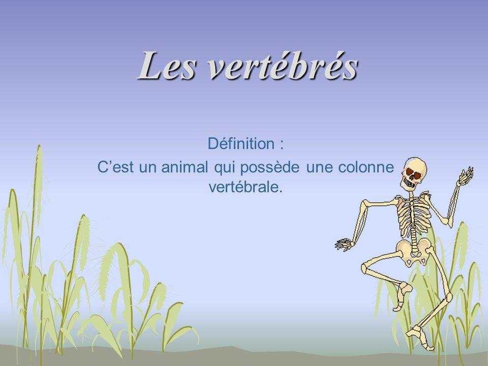 Définition : C'est un animal qui possède une colonne vertébrale.