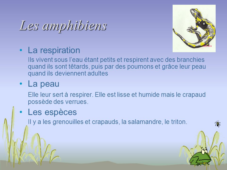 Les amphibiens La respiration La peau Les espèces