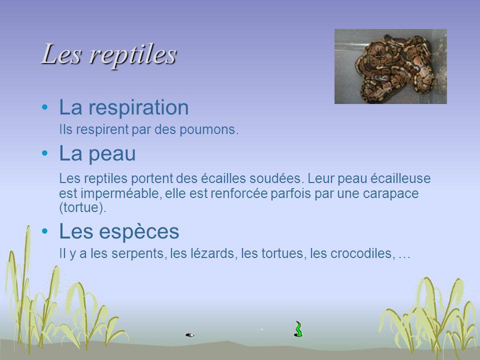 Les reptiles La respiration La peau Les espèces