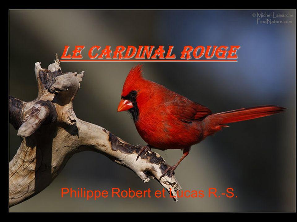 Philippe Robert et Lucas R.-S.