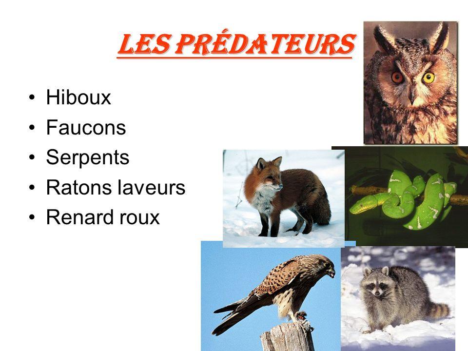 Les prédateurs Hiboux Faucons Serpents Ratons laveurs Renard roux