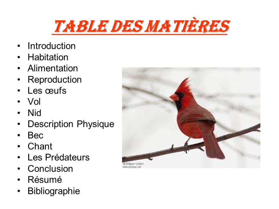 Table Des Matières Introduction Habitation Alimentation Reproduction