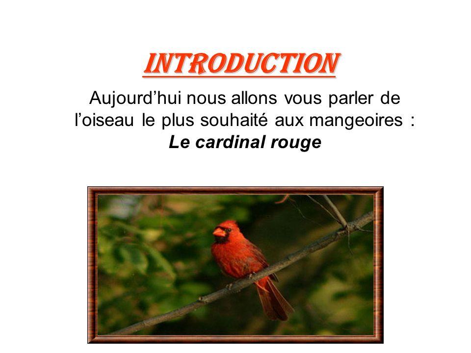 Introduction Aujourd'hui nous allons vous parler de l'oiseau le plus souhaité aux mangeoires : Le cardinal rouge.