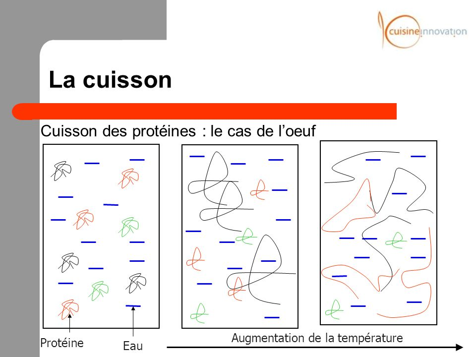 La cuisson Cuisson des protéines : le cas de l'oeuf