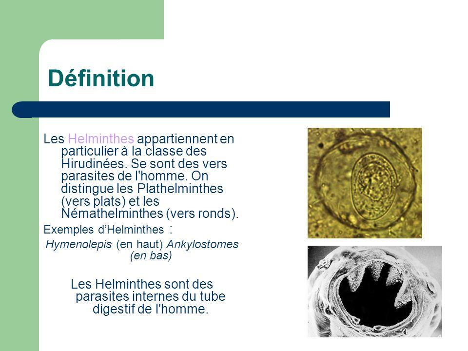Hymenolepis (en haut) Ankylostomes (en bas)