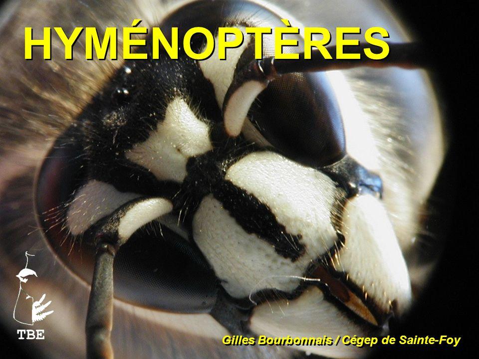 HYMÉNOPTÈRES TBE Gilles Bourbonnais / Cégep de Sainte-Foy