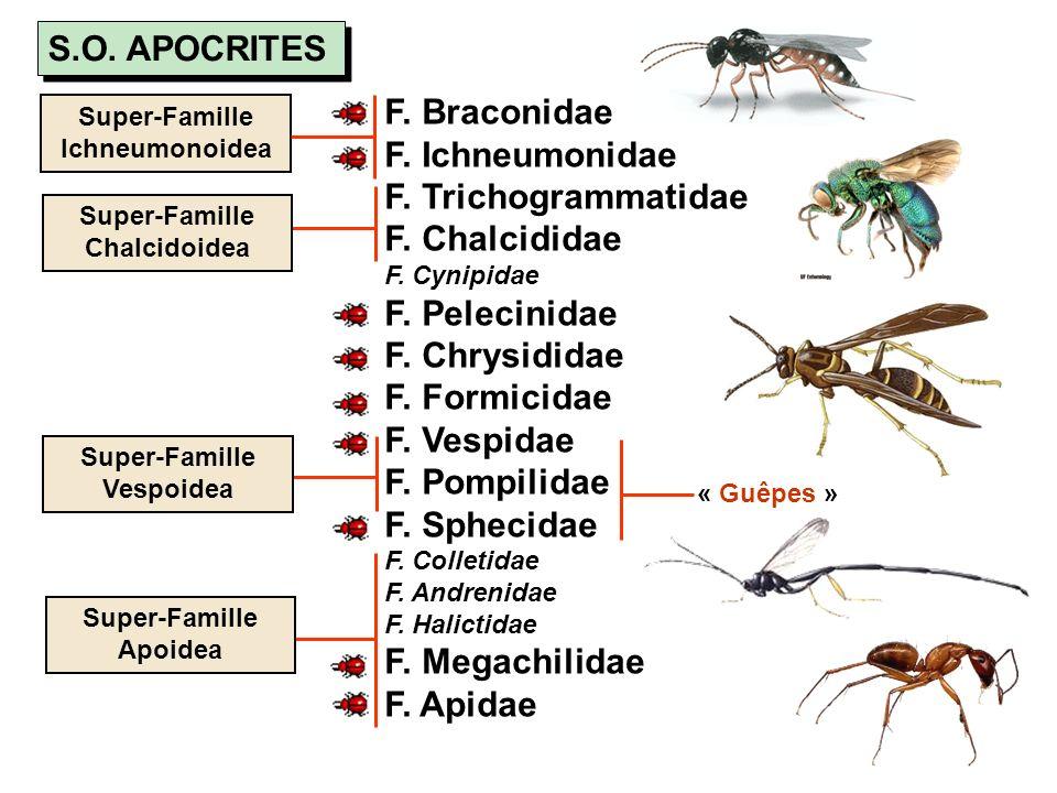 S.O. APOCRITES F. Braconidae F. Ichneumonidae F. Trichogrammatidae