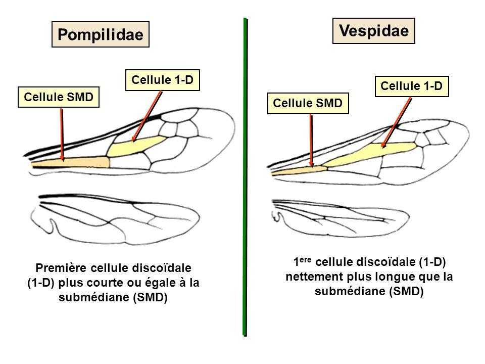 Vespidae Pompilidae Cellule 1-D Cellule 1-D Cellule SMD Cellule SMD