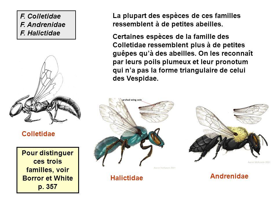 Pour distinguer ces trois familles, voir Borror et White p. 357