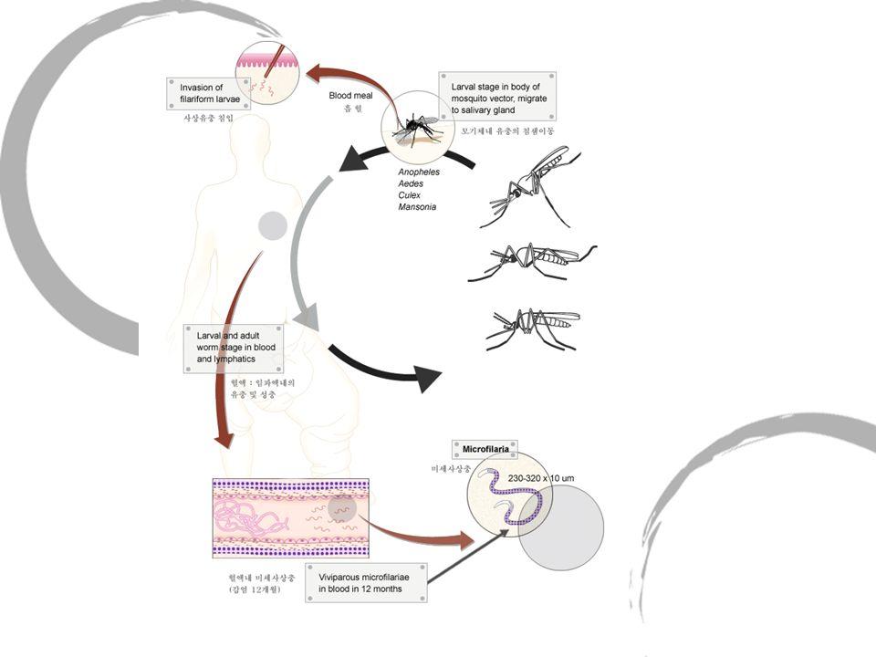 Comparer le développement des moustiques en Camargue et en PF.
