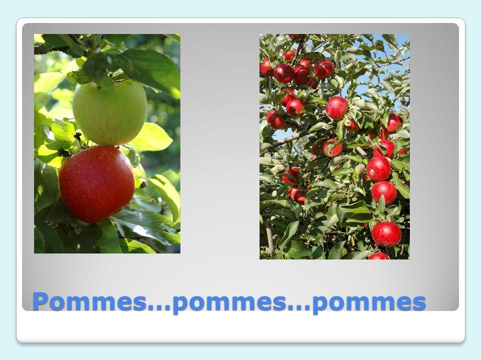 Pommes…pommes…pommes