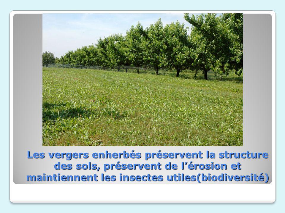 Les vergers enherbés préservent la structure des sols,préservent de l'érosion et maintiennent les insectes utiles(biodiversité)