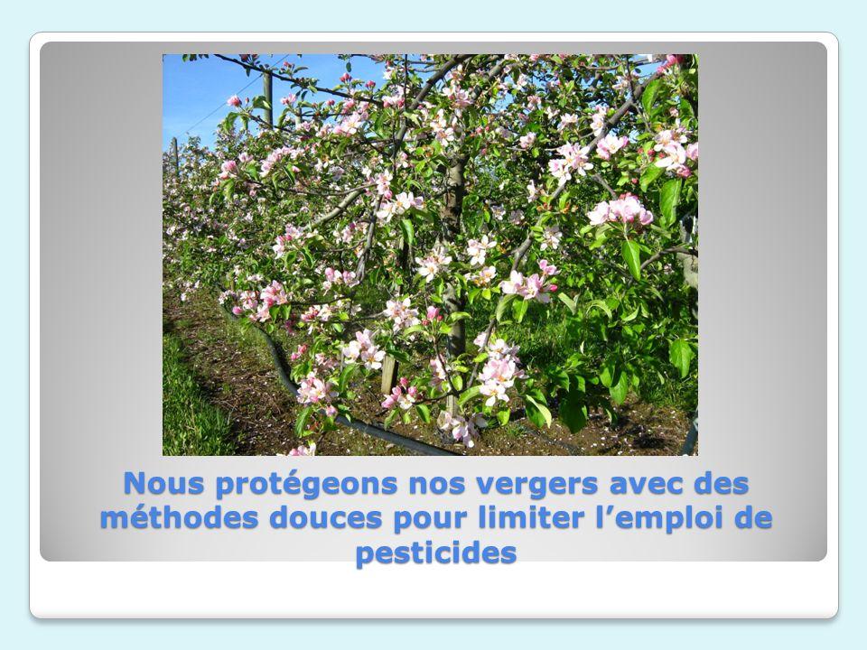 Nous protégeons nos vergers avec des méthodes douces pour limiter l'emploi de pesticides