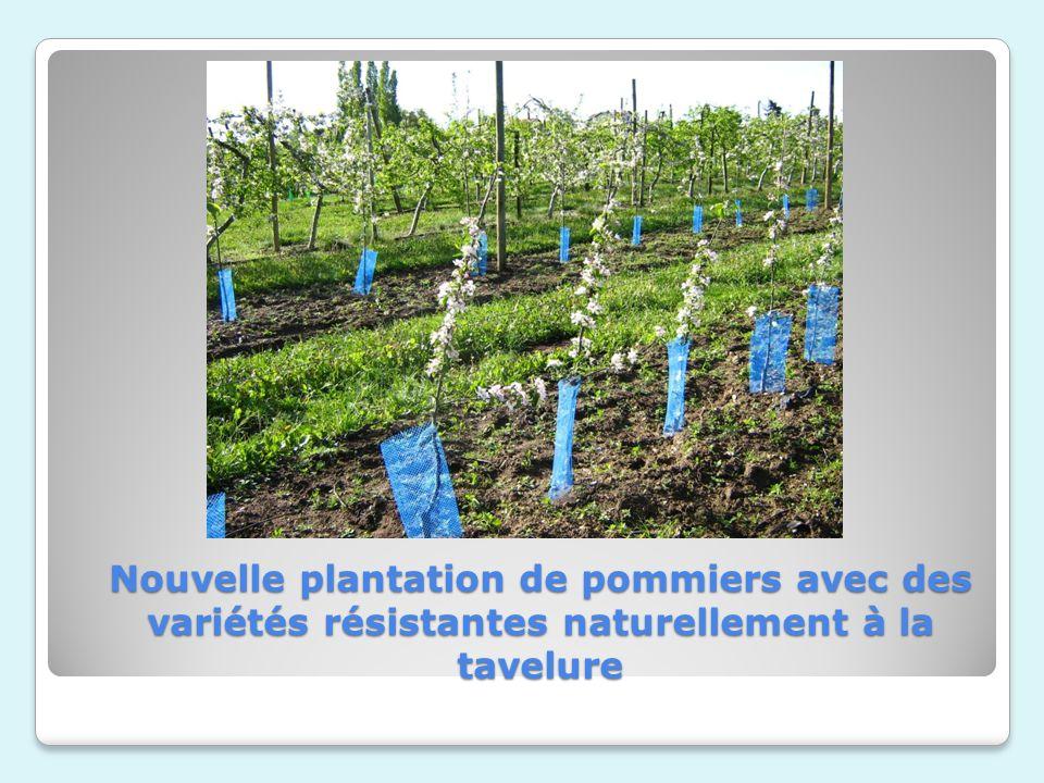 Nouvelle plantation de pommiers avec des variétés résistantes naturellement à la tavelure