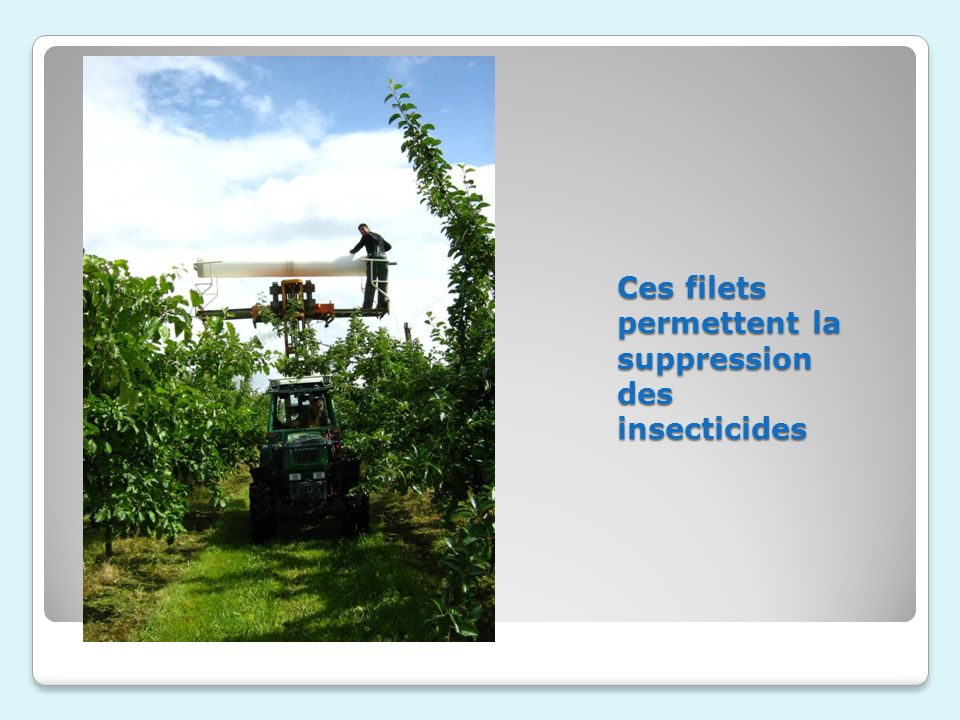 Ces filets permettent la suppression des insecticides