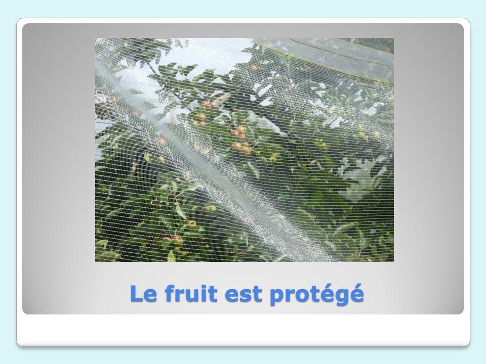 Le fruit est protégé