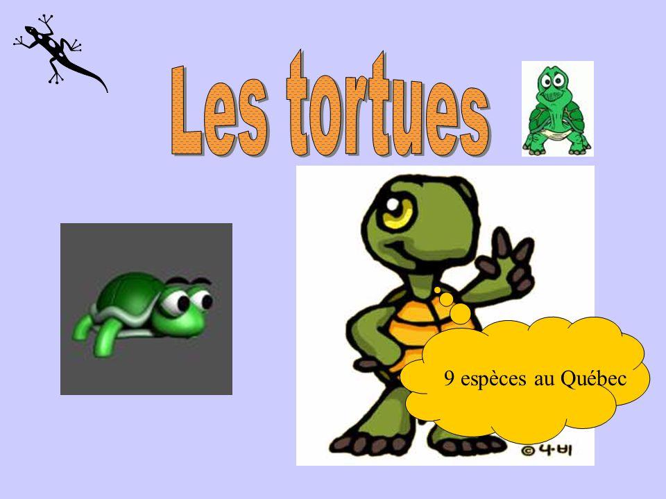 Les tortues 9 espèces au Québec