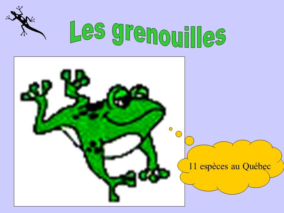 Les grenouilles 11 espèces au Québec