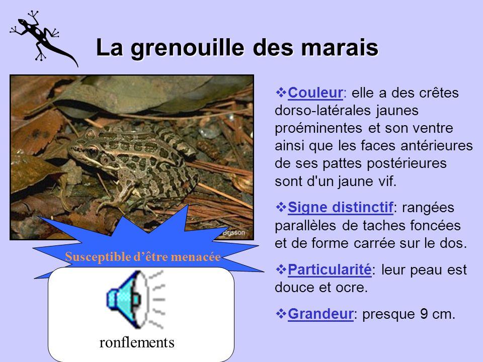 La grenouille des marais
