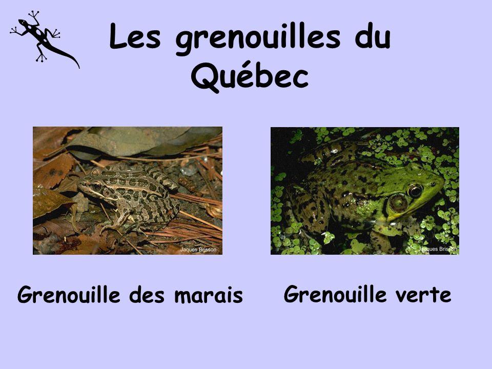 Les grenouilles du Québec
