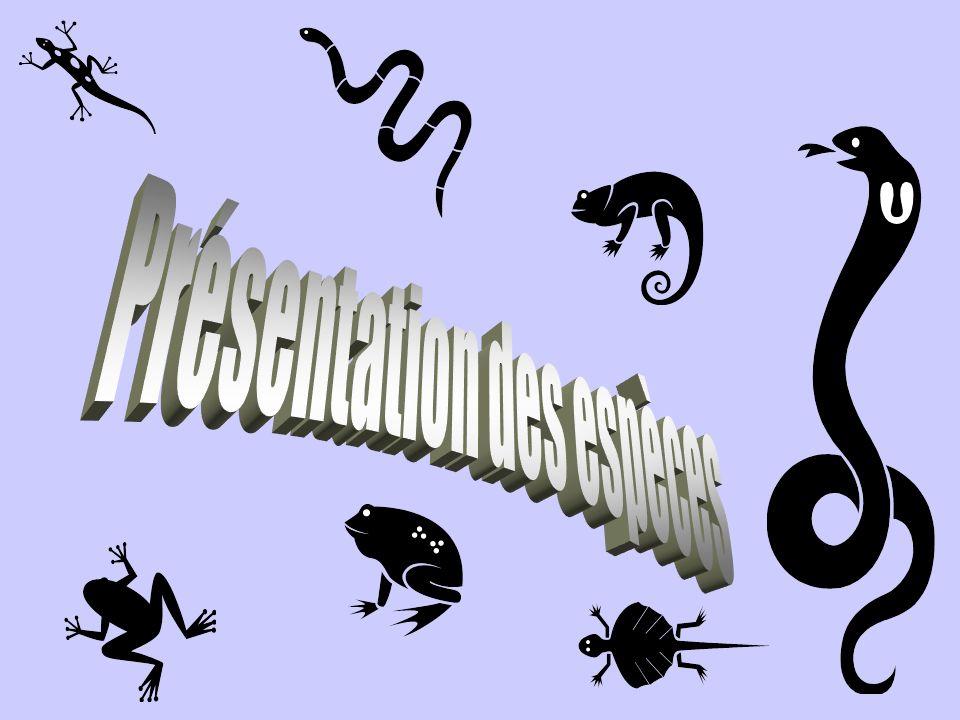 Présentation des espèces