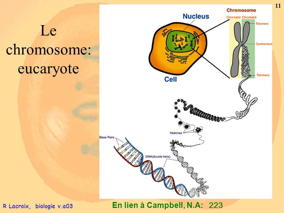 Le chromosome: eucaryote