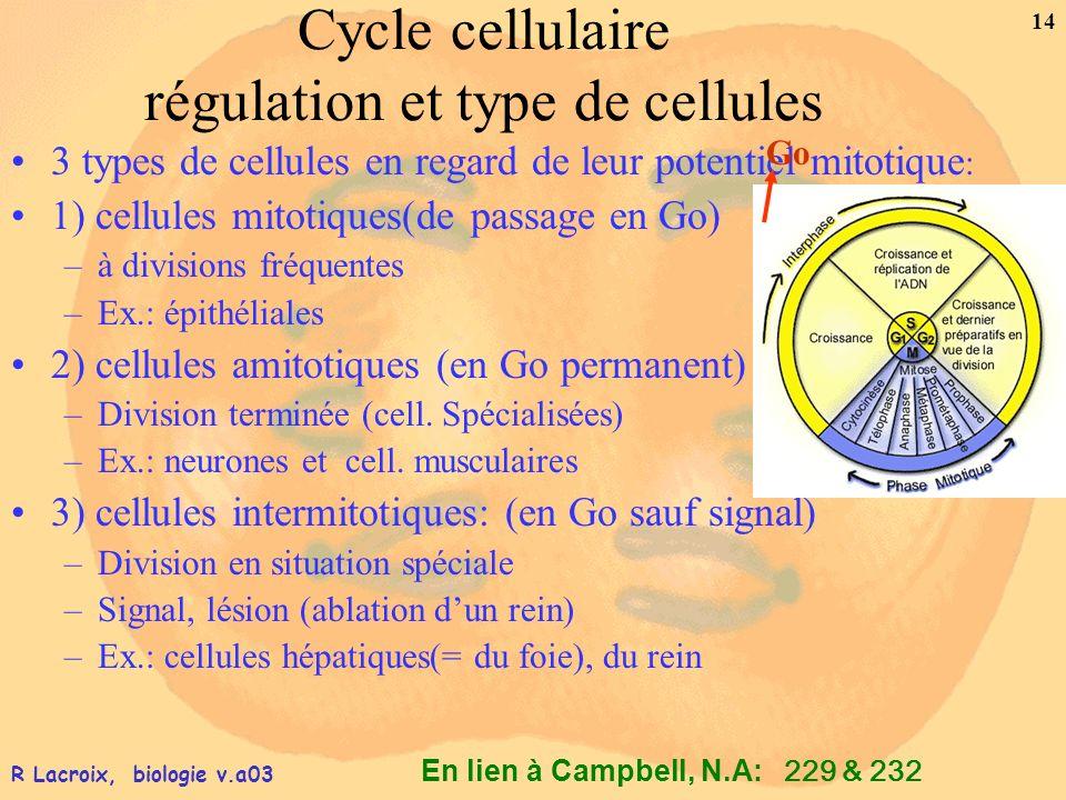 Cycle cellulaire régulation et type de cellules