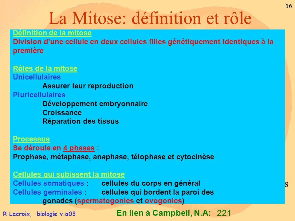 La Mitose: définition et rôle