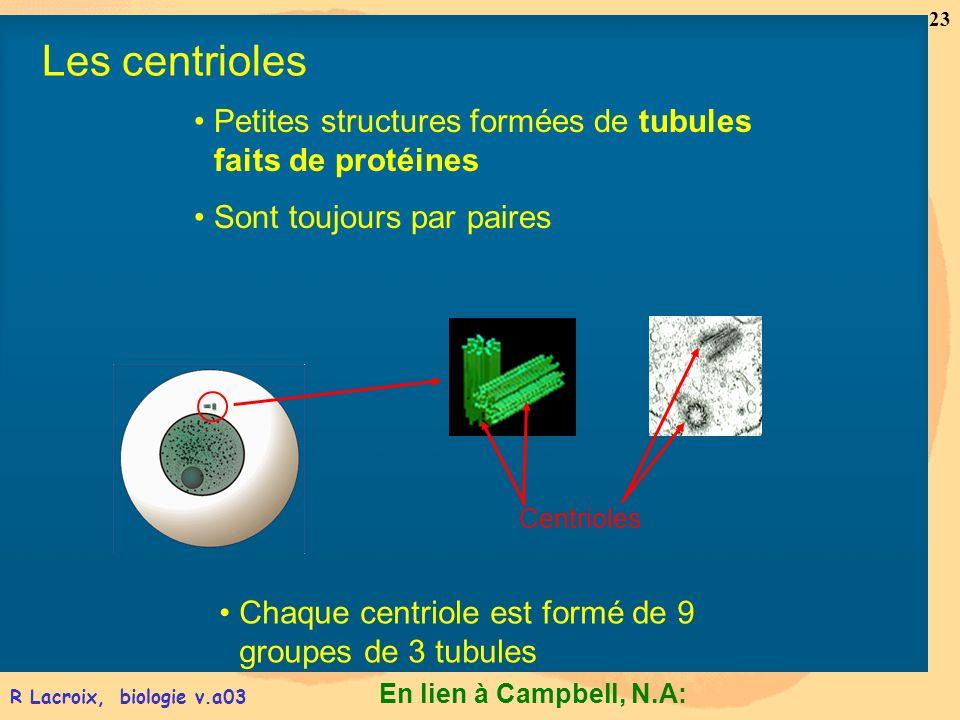 Les centrioles Petites structures formées de tubules faits de protéines. Sont toujours par paires.