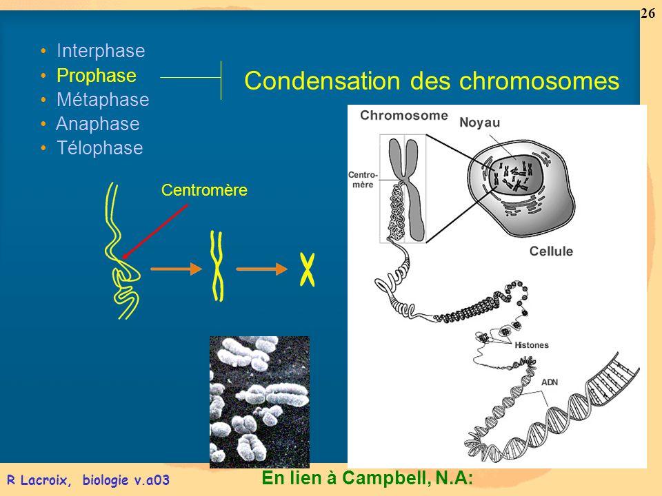 Condensation des chromosomes