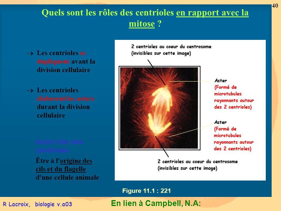 Quels sont les rôles des centrioles en rapport avec la mitose