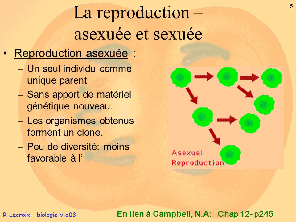 La reproduction – asexuée et sexuée