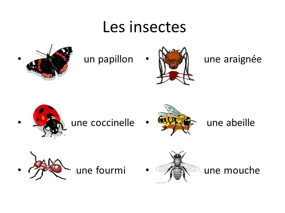 Les insectes un papillon une coccinelle une fourmi une araignée