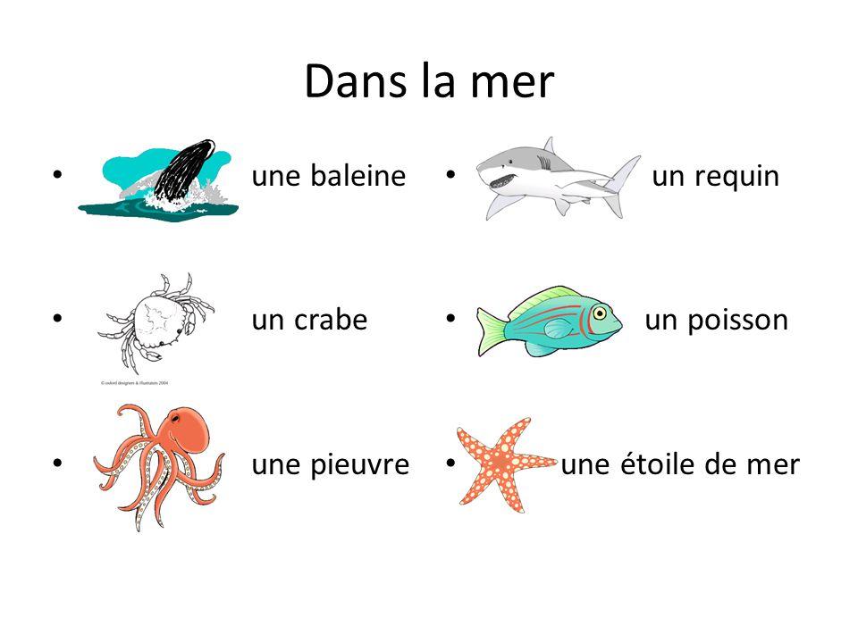 Dans la mer une baleine un crabe une pieuvre un requin un poisson