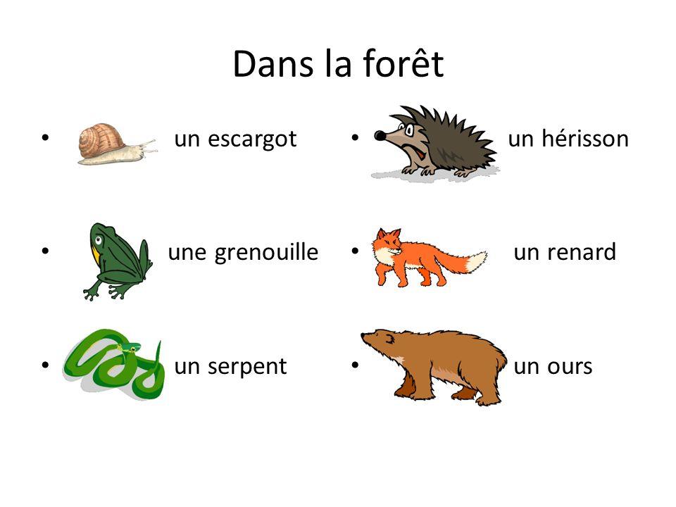 Dans la forêt un escargot une grenouille un serpent un hérisson
